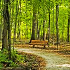 My walk in the park by Gaby Swanson  Photography
