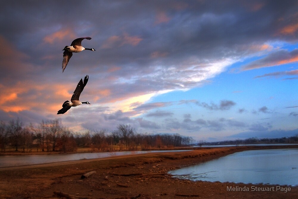 """""""On A Wing And A Prayer"""" by Melinda Stewart Page"""