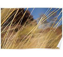 Grass Encounter Poster