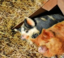 Piggy Love... by WJPhotography