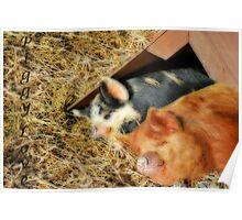 Piggy Love... Poster