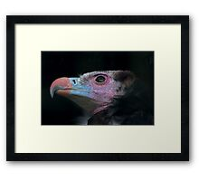 Rainbow Bird Framed Print