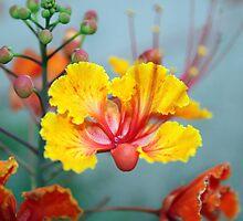 Itty Bitty Blossom by Stephanie  Newbold