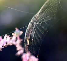 Webmaster by Stephanie  Newbold