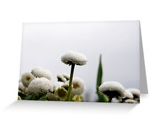 Where does the flower end and the sky begin? Greeting Card