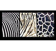 Fractal Fur Photographic Print