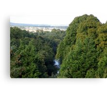 above the tree tops Canvas Print