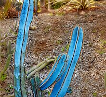 Blue Columnar Cactus by Christine Till  @    CT-Graphics