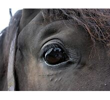 Self Portrait in a Horse's Eye Photographic Print
