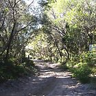 Sandy Track, Bribie Island, Qld, Australia by Sandra  Sengstock-Miller