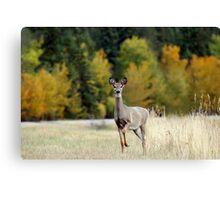 Saskatchewan Doe - Deer Canvas Print