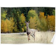 Saskatchewan Doe - Deer Poster