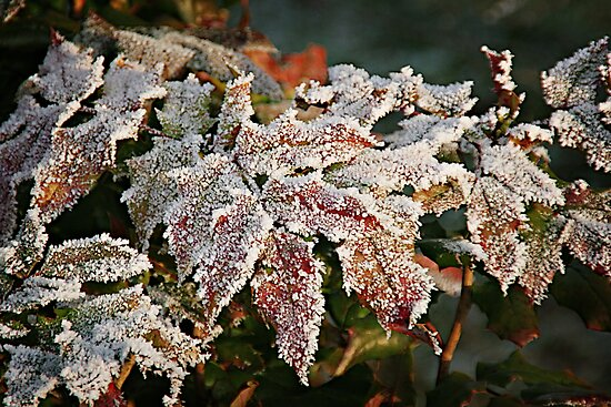 Autumn Leaves in a Frozen Winter World by Christine Till  @    CT-Graphics