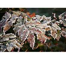Autumn Leaves in a Frozen Winter World Photographic Print