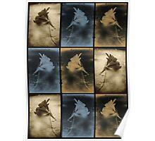 Nasturtium Composite. Poster