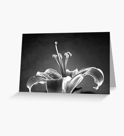 Never Give Up... Greeting Card