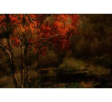 Fall Arrives Photographic Print