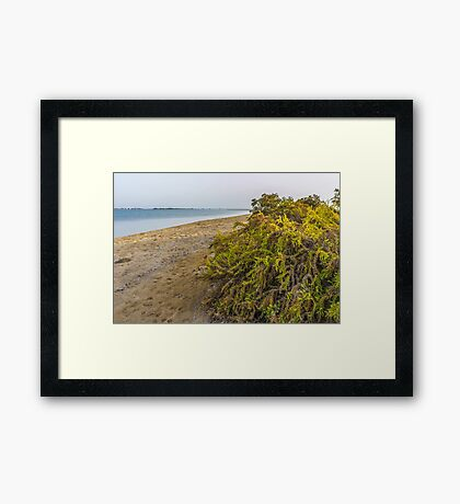 BEACH SHRUBS Framed Print