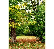 Fallen Leaves....A September scene.. Photographic Print