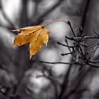 The Last Leaf of Autumn by PhotosByHealy