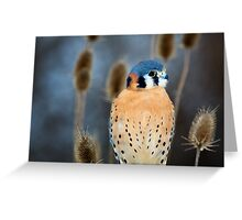 Adult Male American Kestrel Bird Greeting Card