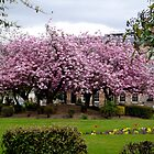Springtime in Blytheswood Square, Glasgow by ElsT