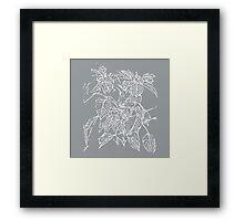 The Plant (grey) Framed Print