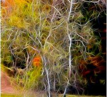 Autumn Birch by Deborah  Benoit