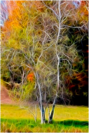 Autumn Birch by Deborah  Benoit