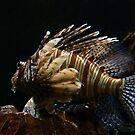 Lion Fish by Vikram Franklin