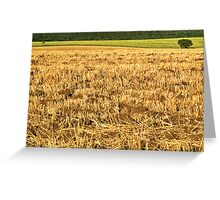 Stubble field Greeting Card