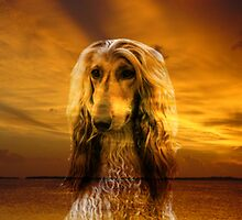 Afghan hound and Sunset by Erika Kaisersot