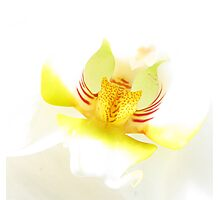 Orchid-love Photographic Print