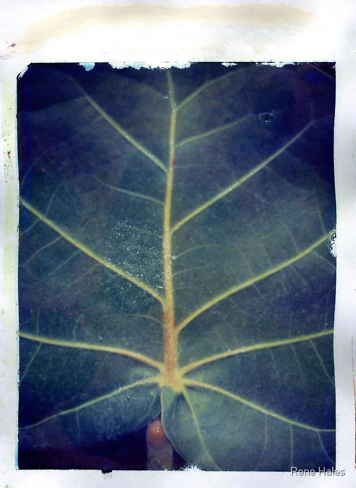 Leaf polaroid transfer by Rene Hales
