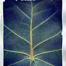 Leaf polaroid transfer by Rene Hales