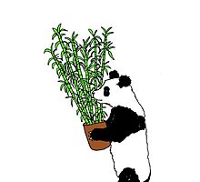 Panda Bamboo Takeaway by mirandaholms