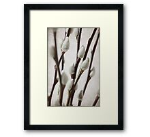 Pussy Willow part 3 Framed Print
