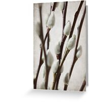 Pussy Willow part 3 Greeting Card