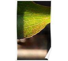 Leaf in translucency I Poster