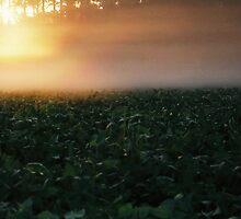 Foggy Sunrise2 by whatseesme