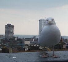 Seagull staring at you, Brighton by karimdatraveler