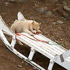 Puppy by Karen Millard