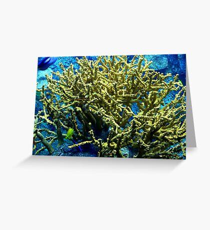 Coral II Greeting Card