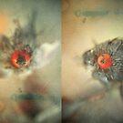 eye by Jill Auville