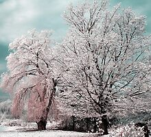 Redreaming Winter Trees  by REDREAMER