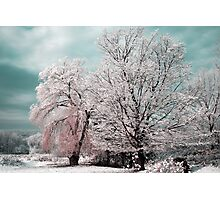 Redreaming Winter Trees  Photographic Print