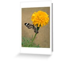 marigold with glasswing Greeting Card