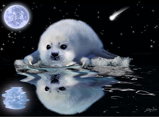 DESTINY The Harp Seal by Skye Ryan-Evans
