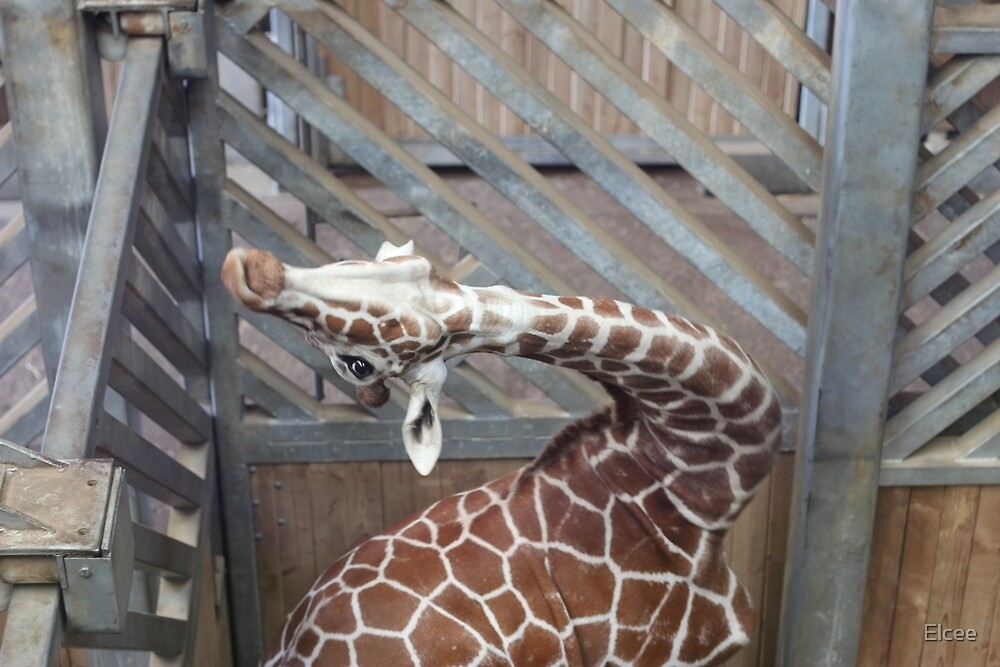Giraffe yoga by Elcee