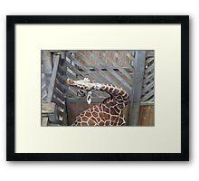 Giraffe yoga Framed Print